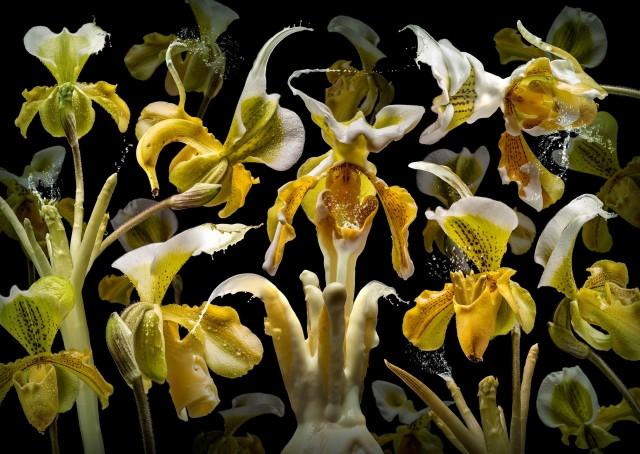Flora Miracula - Olaf Bruhn